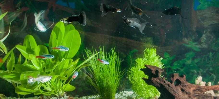 Utilizing the Best UV Sterilizer freshwater aquarium